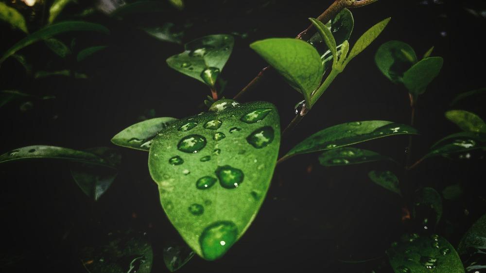 leaf-3293877_1920