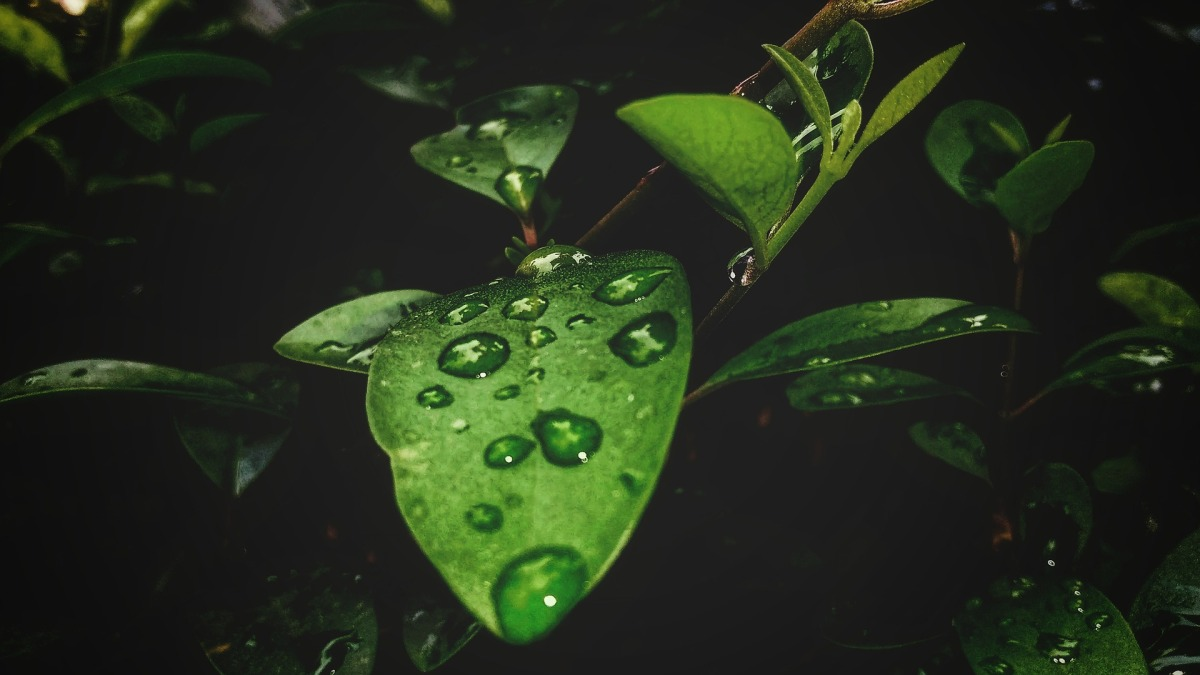 Drops of April rain